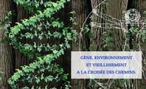gene-environnement-vieillissement